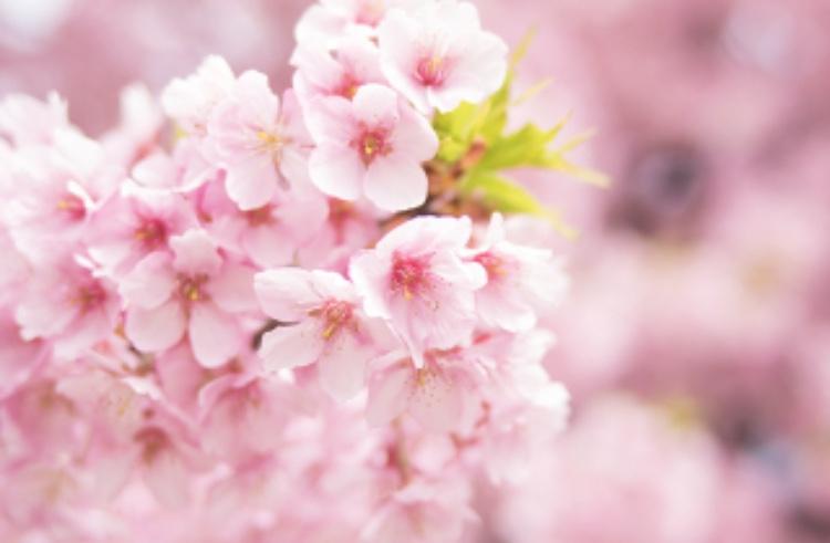 新宿でお花見するなら