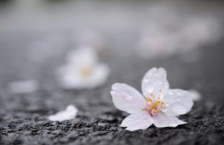 お花見スポットから近い新宿PARTIRE