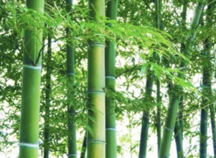 竹を使った施術、バンブートリートメント