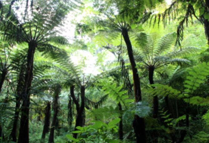 太古の密林
